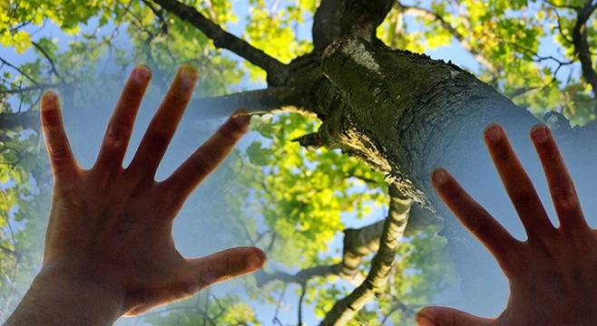 Вкусить плод с Древа познания Добра и Зла